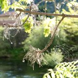 Detai lof a spider web on a green branch Stock Photos