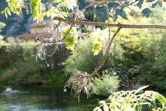 Detai lof a spider web on a green branch Stock Image