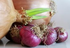 Food and drink. Detai onion with sprout leaves stock photo