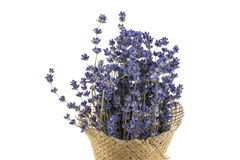Detail über das Vereinbaren des getrockneten Lavendels auf einem weißen Hintergrund stockfotografie