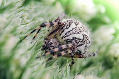 Detail über eine Spinne auf grüner Blume Lizenzfreie Stockfotografie