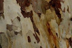 Detail Stock Image
