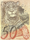 Detail of 50 Real banknote from brazil. Jaguar (panthera onca) on 50 Real banknote from brazil royalty free stock images