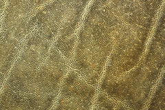 Detail of african elephant skin. Natural animal leather texture Royalty Free Stock Image