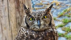 Detail of African owl. Day Royalty Free Stock Images