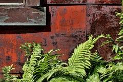 Detail-altes Haus mit Farnen Lizenzfreie Stockfotos