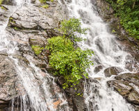 Detail of Amicalola Falls Stock Photography