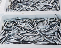 Detail of anchovies at marke Stock Photos