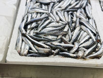 Detail of anchovies at marke Stock Image