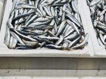 Detail of anchovies at market. In italy Stock Photos