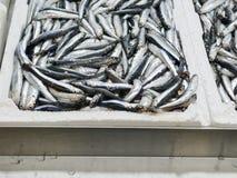 Detail of anchovies at market Stock Photos