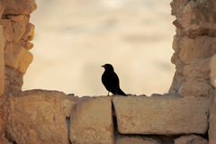Detail of ancient frame of window with blackbird sitting on it Stock Images
