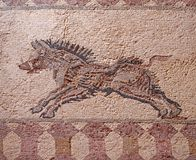 Detail of an ancient roman floor mosaic with the image of a running wild boar from the archeological ruins known as the house of. Dionysus at paphos cyprus royalty free stock photography