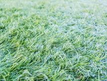 Detail of artificial grass placed on the playing field. Abstract lawn texture football soccer plastic background green display surface soft decoration floor stock photo