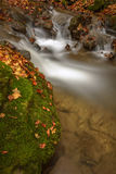 Detail of autumn brook with rocks and leaves Stock Images