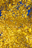 Detail, Autumn, golden aspens Royalty Free Stock Photography