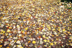 Detail, autumn leaves on the forest floor Royalty Free Stock Image