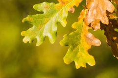 Detail of autumn leaves. Detail of green and yellow autumn leves Stock Images