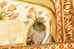 Detail of a baby Taj Mahal with the cute pigeon sitting on it Stock Image
