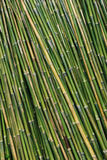 Detail of Bamboo background Royalty Free Stock Photos
