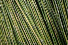 Detail of Bamboo background Stock Photos