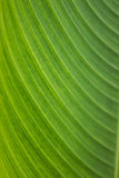 Detail of banana leaves Stock Image