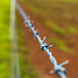 Detail of barbed wire rural fence Royalty Free Stock Photo