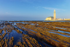 Detail of bare rocks because of low tide at casablanca Royalty Free Stock Image