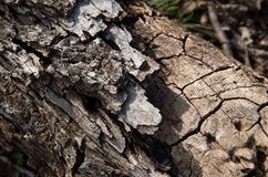 Detail of bark on a fallen tree limb. Detail of bark and cracks on a fallen tree limb in a Texas state park royalty free stock photo