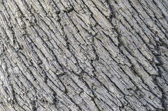 Detail of the bark on a Holm Oak tree. Royalty Free Stock Photo
