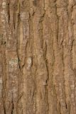 Detail of the bark of a large tree basking in the sun Stock Photos