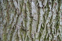 Detail of bark texture Stock Photography