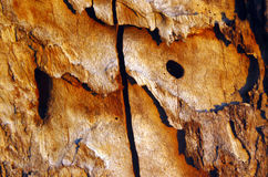 The detail of bark tree Šalinac lye Stock Photography