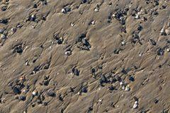Beach Detail. Detail of a beach with sand and shells in Brittany in North of France Stock Photo