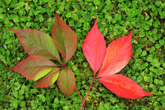 Detail of beautiful autumn colorful Leaves Stock Photography