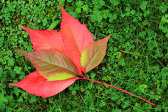Detail of beautiful autumn colorful Leaves Royalty Free Stock Images