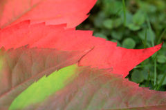 Detail of beautiful autumn colorful Leaves Royalty Free Stock Image