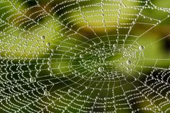 Detail of beautiful cobweb with pearls from dew drops Stock Image