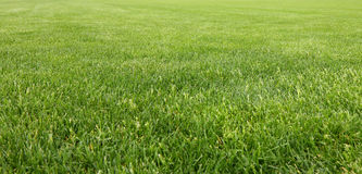 Detail of a beautiful green mowed lawn Royalty Free Stock Photos