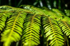 Detail of a beautiful leaf of Fern close-up Stock Photo