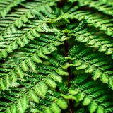 Detail of a beautiful leaf of Fern close-up Stock Photography