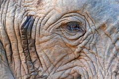 Detail of big elephant. Wildlife scene from nature. Art view on nature. Eye close-up portrait of big mammal, Etosha NP, Namibia in. Africa. Detail of wrinkled stock images