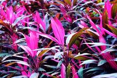 Detail bij de roze achtergrond van de blad Aziatische bloem Royalty-vrije Stock Fotografie