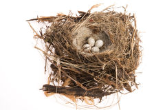 Detail of bird eggs in nest Royalty Free Stock Image