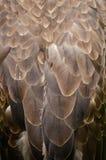 Detail bird Stock Photo