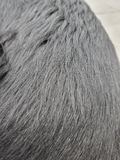 Detail of the black coat of the dog.  It is shiny and healthy.  The sun reflects on his hair. Detail black coat dog shiny healthy sun reflects his hair royalty free stock photography