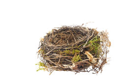 Detail of blackbird nest isolated Stock Photo