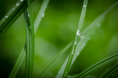 Detail of blade of grass with morning dew Stock Images