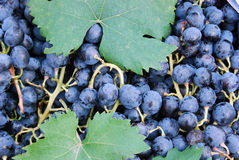 The detail of blue grape Royalty Free Stock Photo