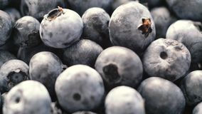 Detail of Blueberries. Macro trucking shot. 4K resolution top view. Close up. Detail of Blueberries. Macro trucking shot. 4K resolution top view, close up stock video footage